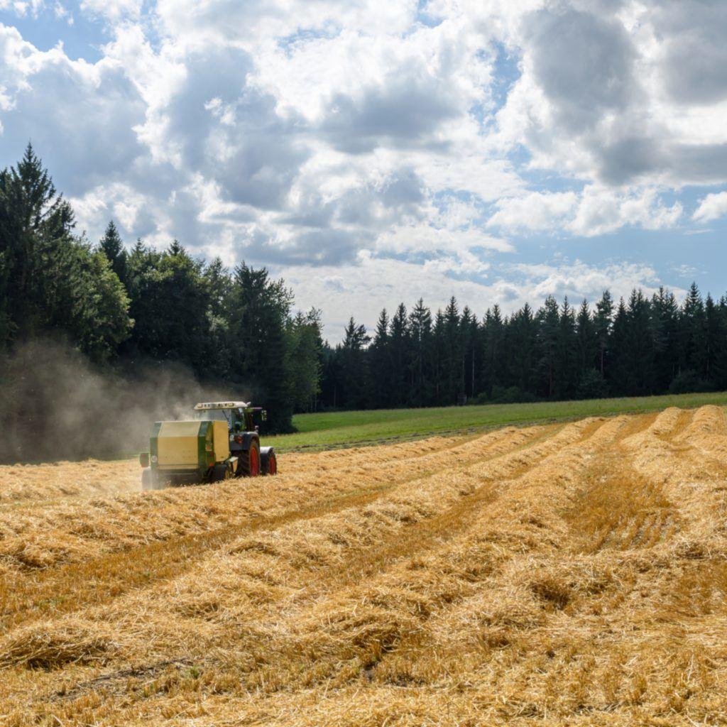 Récupérer Un Terrain Agricole Loué Sans Bail Guide Complet